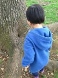 木のくぼみ
